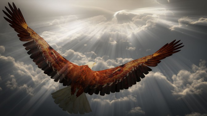 What Human should learn from EAGLE ? -Read to get answer.
